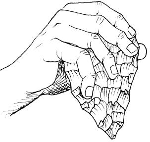 """""""Agarre de un bifaz"""" von José-Manuel Benito Álvarez (España) —> Locutus Borg - Eigenes Werk. Lizenziert unter Gemeinfrei über Wikimedia Commons - https://commons.wikimedia.org/wiki/File:Agarre_de_un_bifaz.png#/media/File:Agarre_de_un_bifaz.png"""